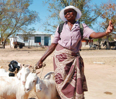 Grandma with goats